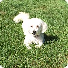 Adopt A Pet :: Pretty Elsa
