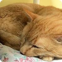 Adopt A Pet :: Redmond - Lunenburg, MA
