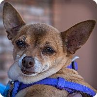 Adopt A Pet :: Franny - San Marcos, CA