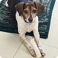Adopt A Pet :: Lilly - Hillsboro, IL