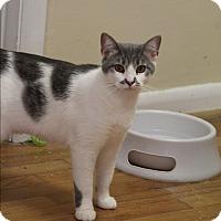 Adopt A Pet :: Stache - Marietta, GA