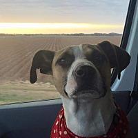 Adopt A Pet :: Sheila - Somerville, TX