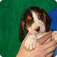 Adopt A Pet :: Daphne - Oviedo, FL