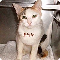 Adopt A Pet :: Pixie - El Cajon, CA