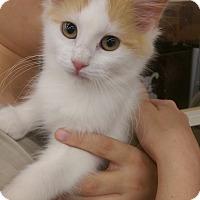 Adopt A Pet :: Anne - Ogden, UT