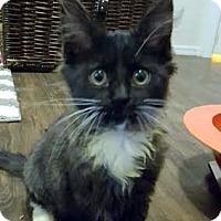Adopt A Pet :: Forrest - Chandler, AZ
