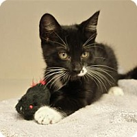 Adopt A Pet :: The Mad Hatter - Lakeland, FL