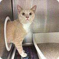 Adopt A Pet :: Watsky - Janesville, WI