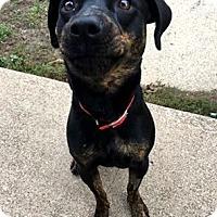 Adopt A Pet :: Maggie - Elyria, OH