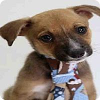 Adopt A Pet :: SAGE - Dedham, MA
