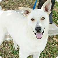 Adopt A Pet :: Bojangles - Brownsboro, AL