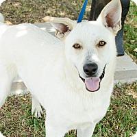 German Shepherd Dog Mix Dog for adoption in Brownsboro, Alabama - Bojangles