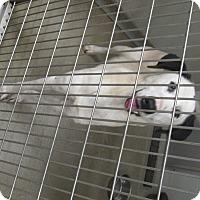 Adopt A Pet :: Bonnie - Humble, TX