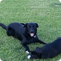 Adopt A Pet :: Jimmy - Yorkton, SK