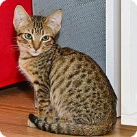 Adopt A Pet :: Keena - Davis, CA