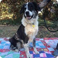 Adopt A Pet :: Bandit - Salisbury, NC