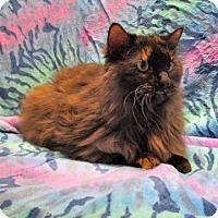 Adopt A Pet :: 17-c01-013 Sheba - Fayetteville, TN