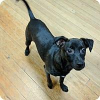 Adopt A Pet :: Matthew - Plainfield, CT