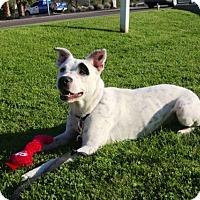Adopt A Pet :: XARA - Phoenix, AZ