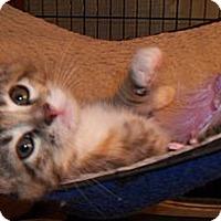 Adopt A Pet :: Lalima - Acme, PA