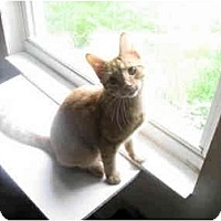 Adopt A Pet :: Sunny - Xenia, OH