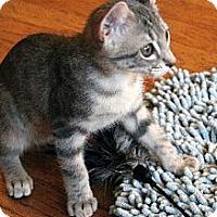 Adopt A Pet :: Lolo - Chicago, IL