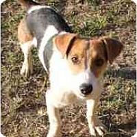 Adopt A Pet :: Charlie in Lufkin - Houston, TX