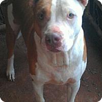 Adopt A Pet :: Lucky - Blanchard, OK