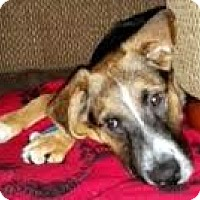Adopt A Pet :: Anthony - Toledo, OH