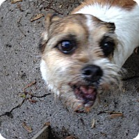 Adopt A Pet :: Jenni - Fishers, IN
