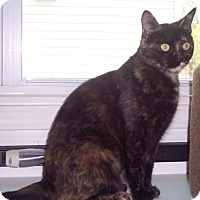 Adopt A Pet :: Mable - brewerton, NY