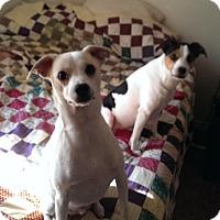 Adopt A Pet :: Dew & Loretta In Princeton, TX - Austin, TX