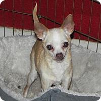 Adopt A Pet :: Gladys - Fresno, CA