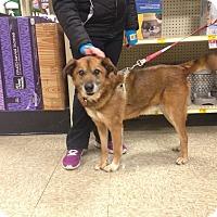 Adopt A Pet :: Germani - Delaware, OH