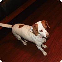 Adopt A Pet :: Tia - mooresville, IN