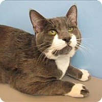Adopt A Pet :: Rascal - Portland, OR