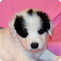 Adopt A Pet :: **ROSE** MEET FEB 13TH! - Mukwonago, WI