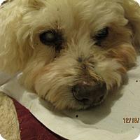 Adopt A Pet :: Max 16 1/2 - Wapwallopen, PA