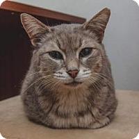 Adopt A Pet :: Busah - Brooklyn, NY