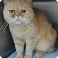 Adopt A Pet :: CELENA - Powder Springs, GA