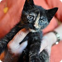 Adopt A Pet :: Jada - Tanner, AL