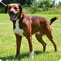 Adopt A Pet :: Jameson - DuQuoin, IL
