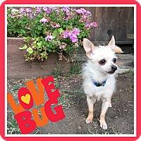 Adopt A Pet :: Sparkles - San Francisco, CA