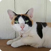 Adopt A Pet :: Starbuck - Yucaipa, CA
