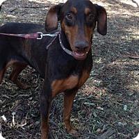Adopt A Pet :: Canella - San Diego, CA