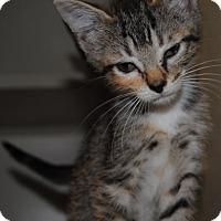 Adopt A Pet :: Avocado - Ridgeland, SC