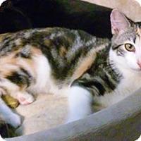 Adopt A Pet :: Chatara - North Highlands, CA
