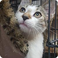 Adopt A Pet :: Samuel - Hallandale, FL