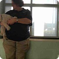 Adopt A Pet :: COCO - Tulsa, OK