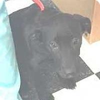 Adopt A Pet :: Frankie - Dawson, GA